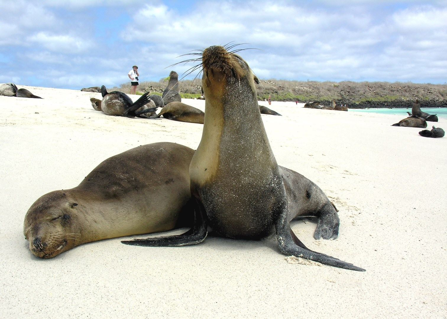 Tailor Made Holidays To Galapagos Islands Audley Travel