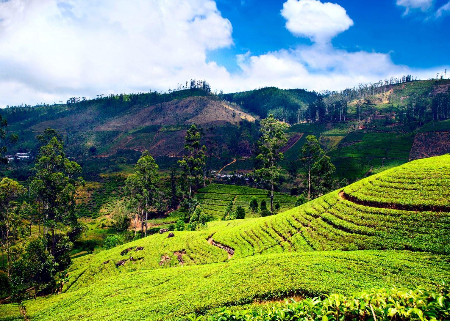 Visit Kandy on a trip to Sri Lanka | Audley Travel
